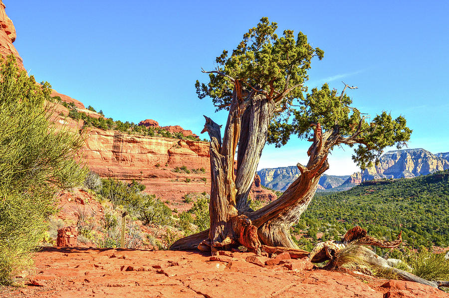 Southwest Photograph - Iconic Southwest by Mauverneen Blevins