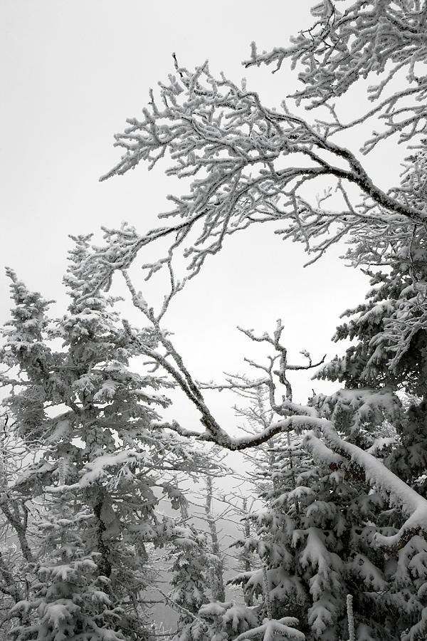 Winter Landscape Photograph - Icy Branches In The Adirondack Mountains Of New York by Brendan Reals