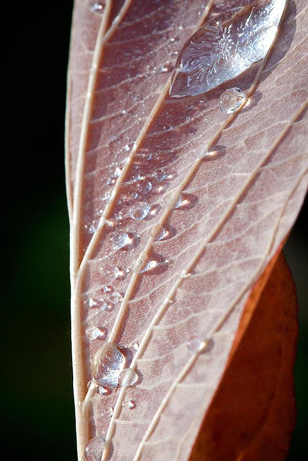 Lisa Knechtel Photograph - Icy Fall Morning by Lisa Knechtel