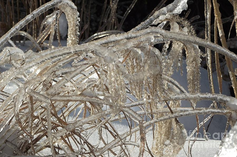Ice Photograph - Icy Grass by David and Lynn Keller