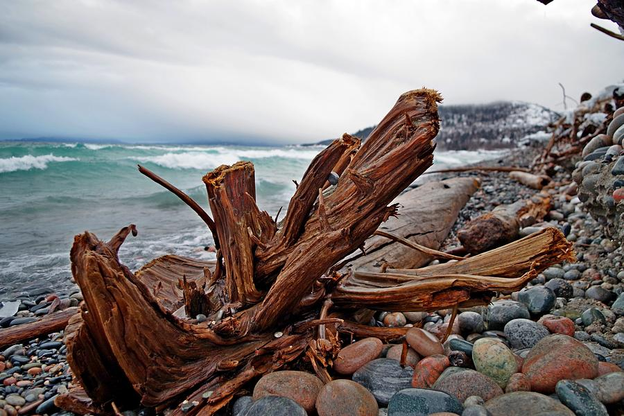 Driftwood Photograph - Icy Landing by Tim Beebe