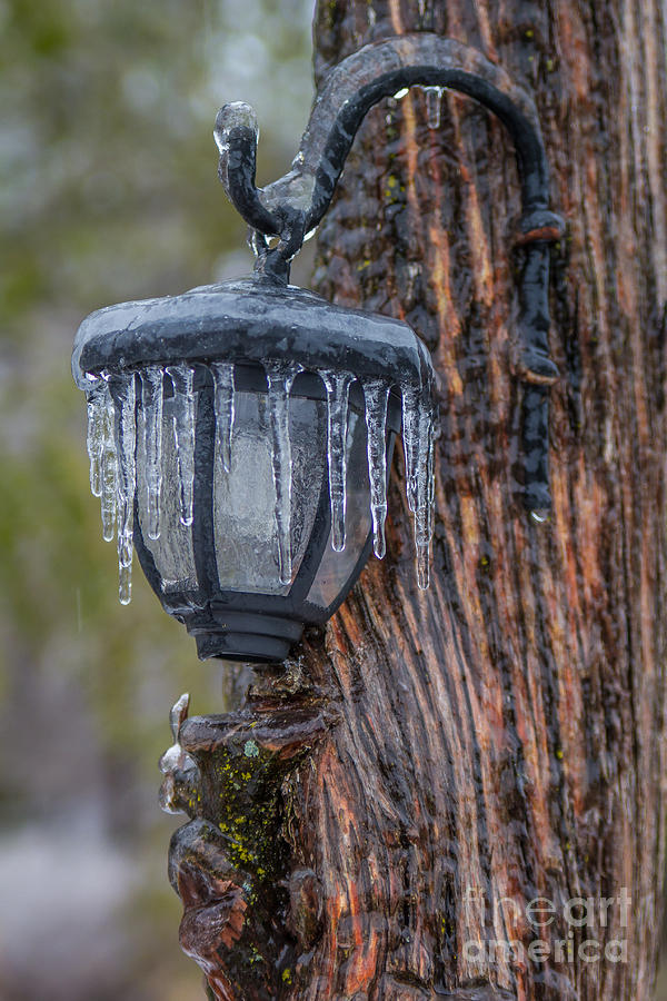 Icy Lantern by Jim McCain