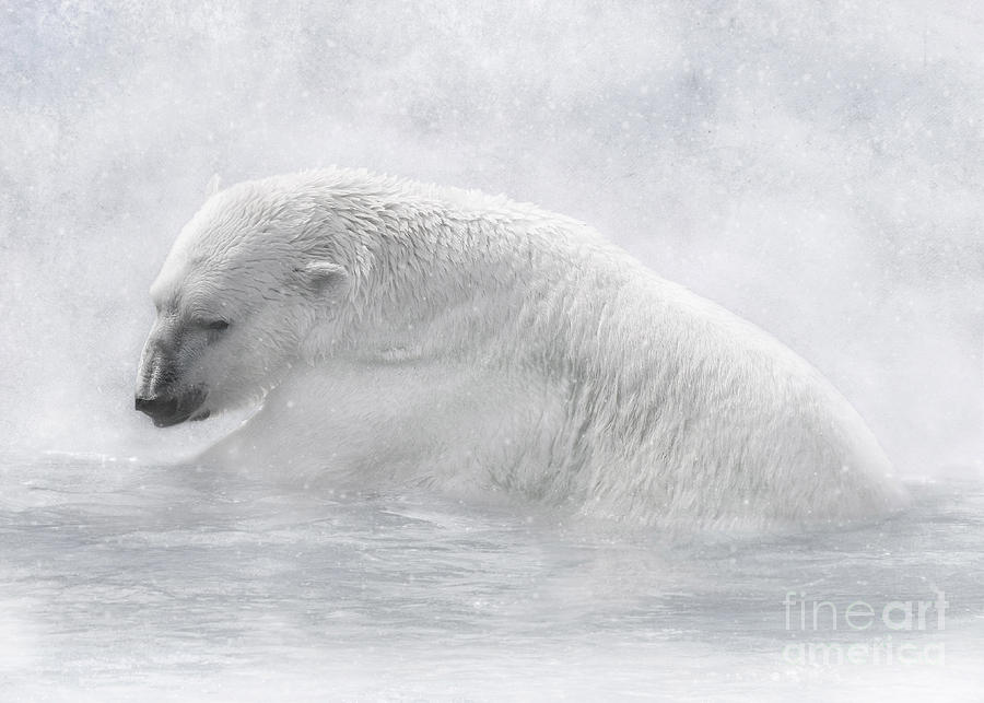 Polar Bear Digital Art - Icy Waters by Lynn Jackson