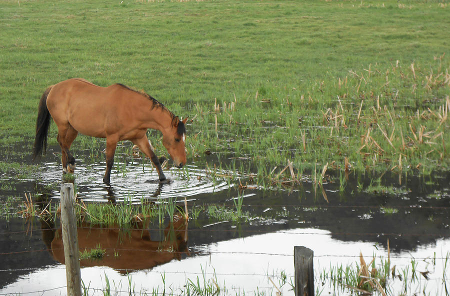 Farmland Photograph - Idaho Farm Horse 2 by Cynthia Powell