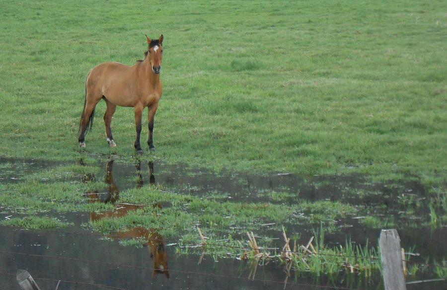 Farmland Photograph - Idaho Farm Horse1 by Cynthia Powell
