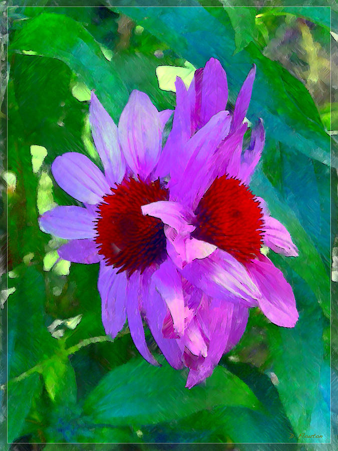 Echinacea Photograph - Identical Twins by Dee Flouton