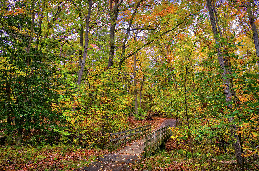 Idyllic wooden walking bridge in a forest during Autumn with Fal by Patrick Wolf