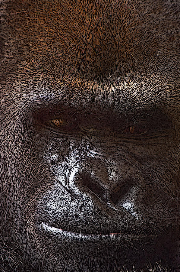 Ape Photograph - If I Could Only Tell My Story by Tito Santiago