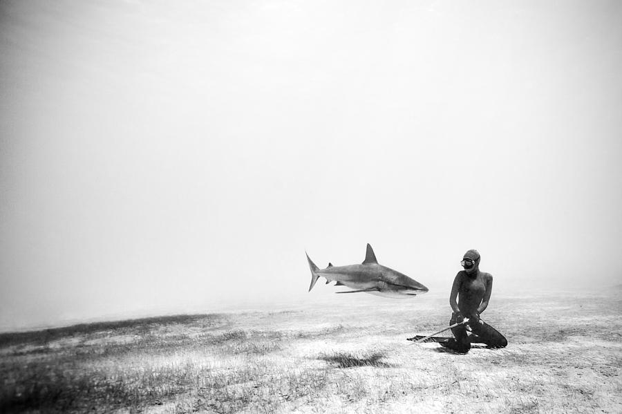 Freediving Photograph - If Sharks Could Fly by One ocean One breath