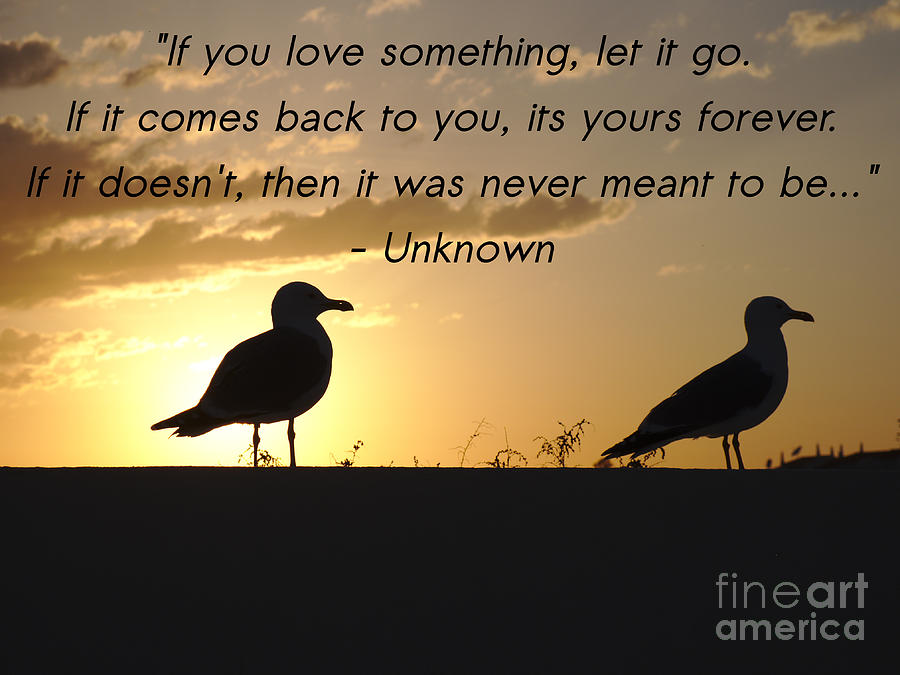 If You Love Something Let It Go Photograph By Angelo Deval