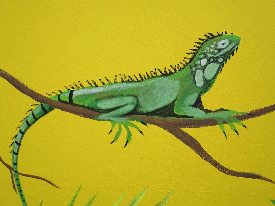 Iguana Photograph - Iguana by Anthony Schafer