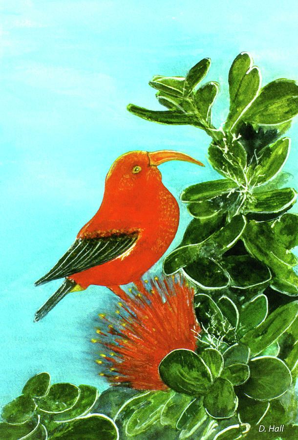 Iiwi Painting -  IIwi Scarlet Honeycreeper Bird #54 by Donald k Hall