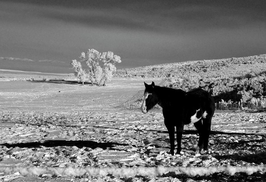 Il Cavallo Nella Neve Nero E Bianco Photograph By Frank Henley