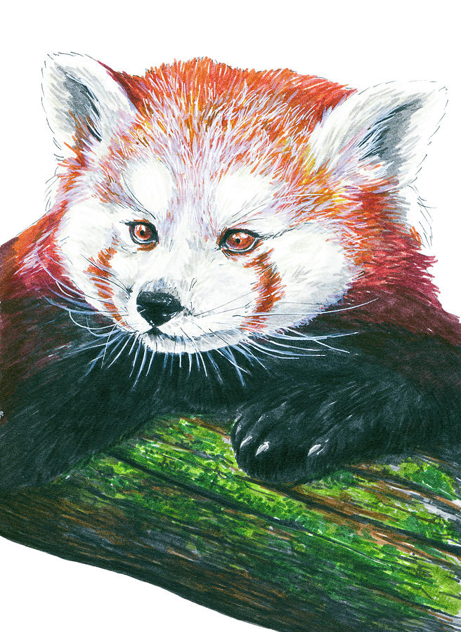 Animal Painting - Illlustration Of Red Panda On Branch Drawn With Faber Castell Pi by Katerina Kirilova
