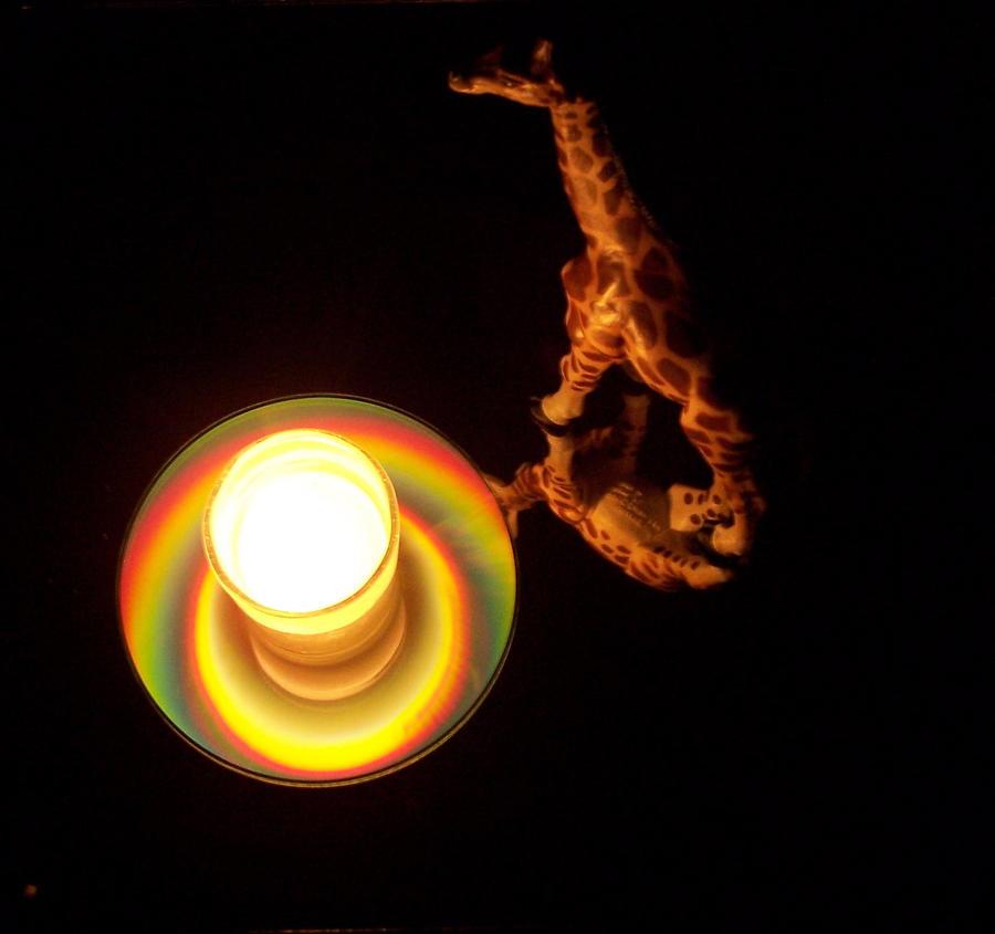Giraffe Photograph - Illuminated Objects by Michelle Miron-Rebbe