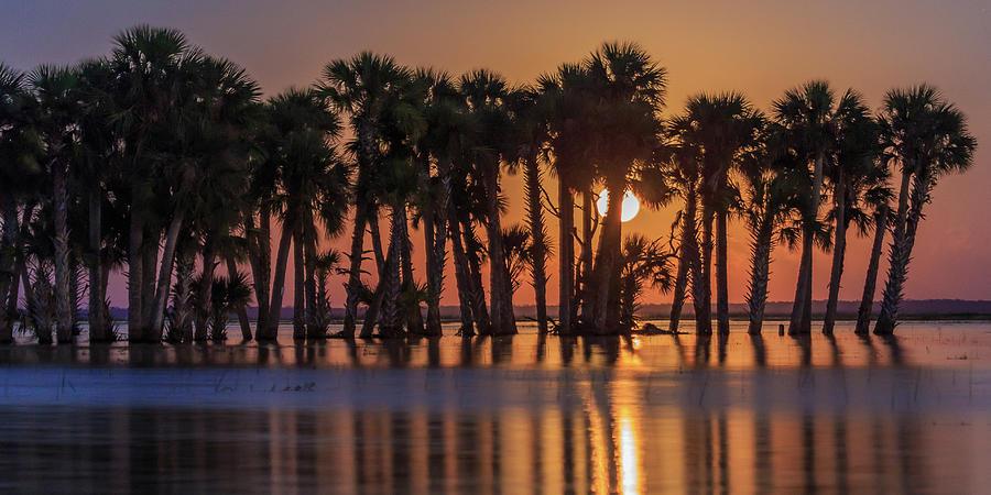 Florida Photograph - Illuminated Palm Trees by Stefan Mazzola