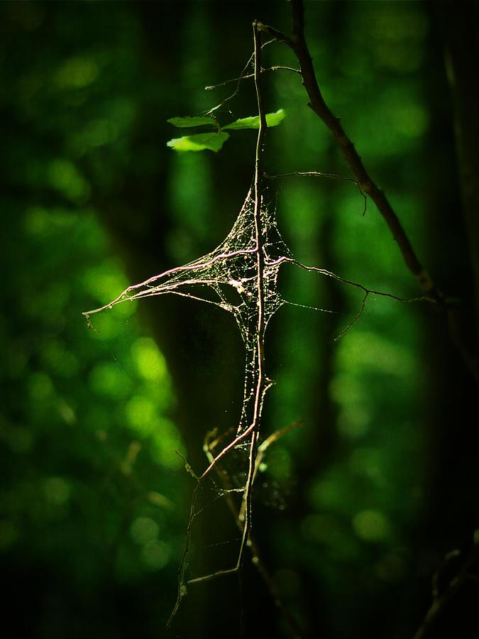 Forest Photograph - Illumination by Rebecca Sherman