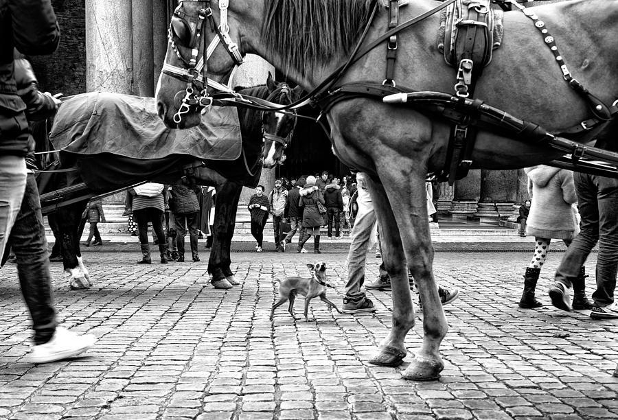 Rome Photograph - Im Here! by Lorenzo Grifantini