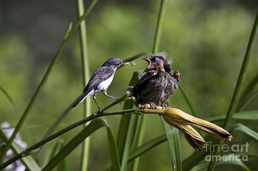 Baby Bird Photograph - Im Hungry 6 by E Mac MacKay