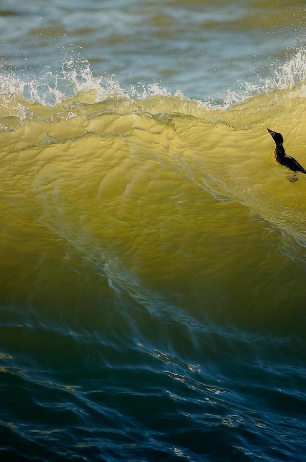 Sea Green Photograph - Im Invigorated by Sherry Clark