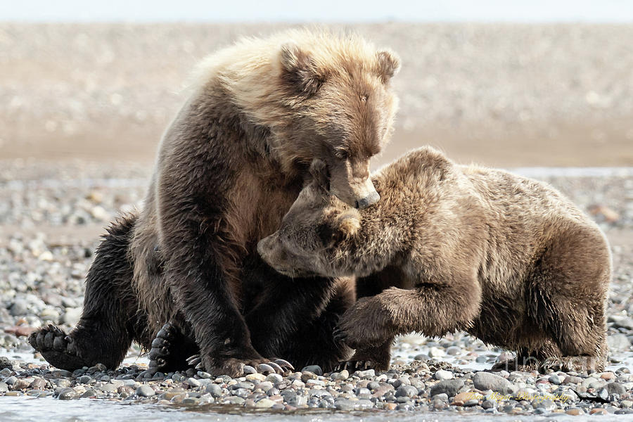 Alaska Photograph - Im Not In The Mood For Your Whining by Thomas Major