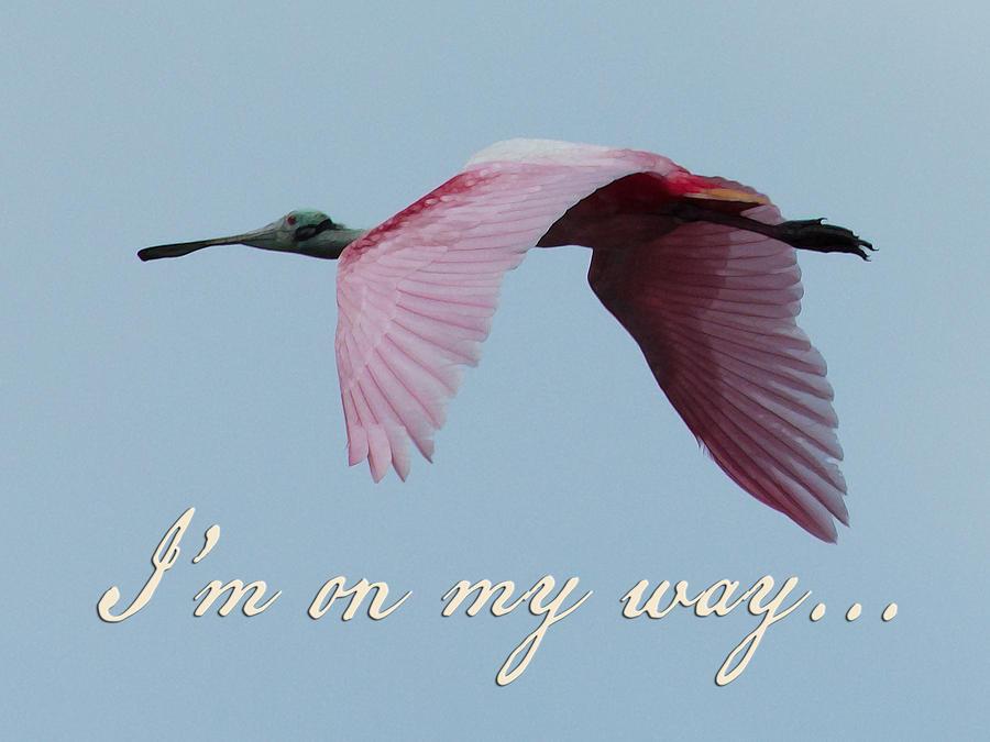 Roseate Spoonbill Digital Art - Im On My Way by Mary Elizabeth Thompson