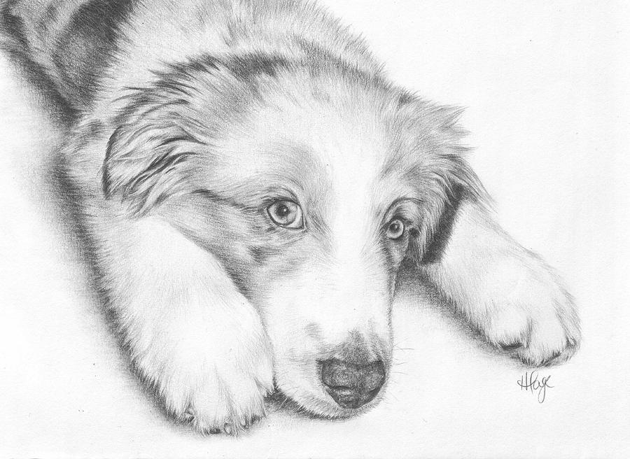 Australian Shepherd Drawing - Im Sorry - Australian Shepherd Puppy by Heather Page