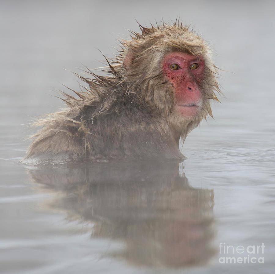 Snow Monkeys Photograph - Im Still Cold by Leigh Lofgren