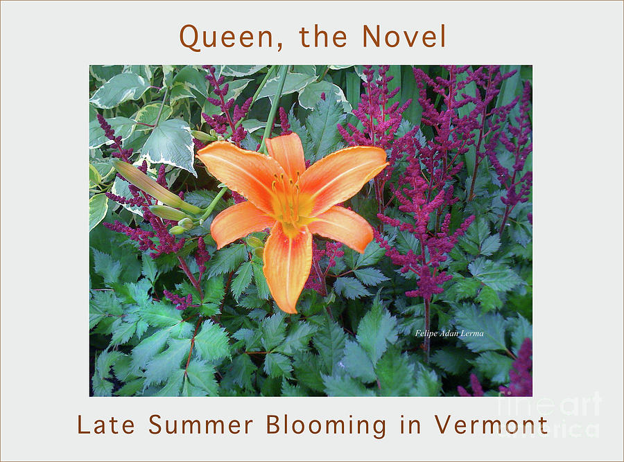 Image Included In Queen The Novel - Late Summer Blooming In Vermont 23of74 Enhanced Poster Photograph