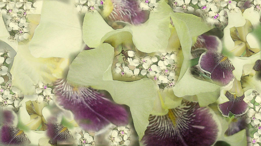 Iris Photograph - Imagine by Rose Guay
