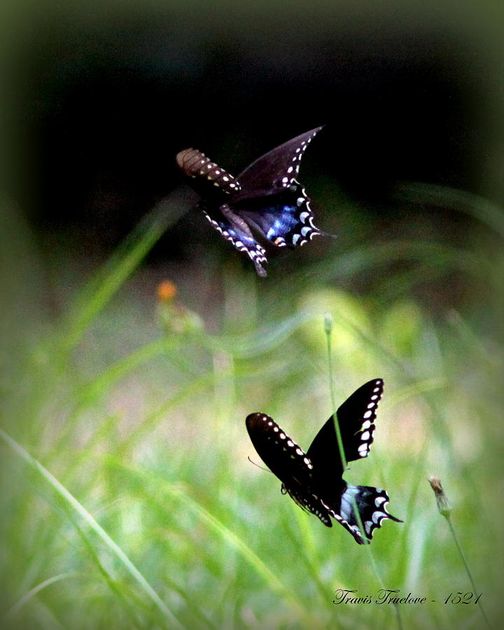 Butterfly Photograph - Img_1521 - Butterfly by Travis Truelove