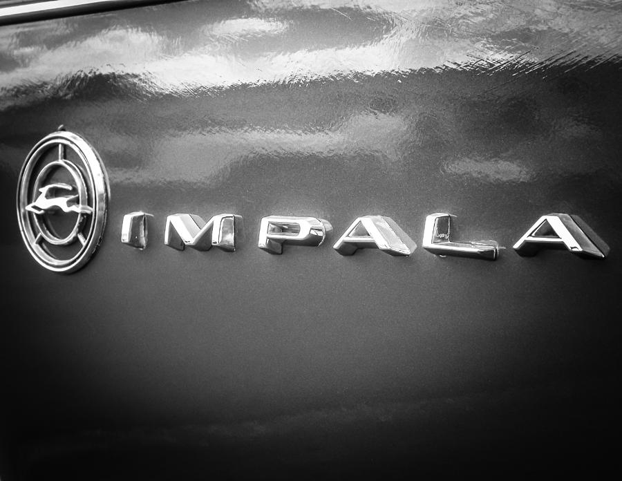 Impala Nights Photograph