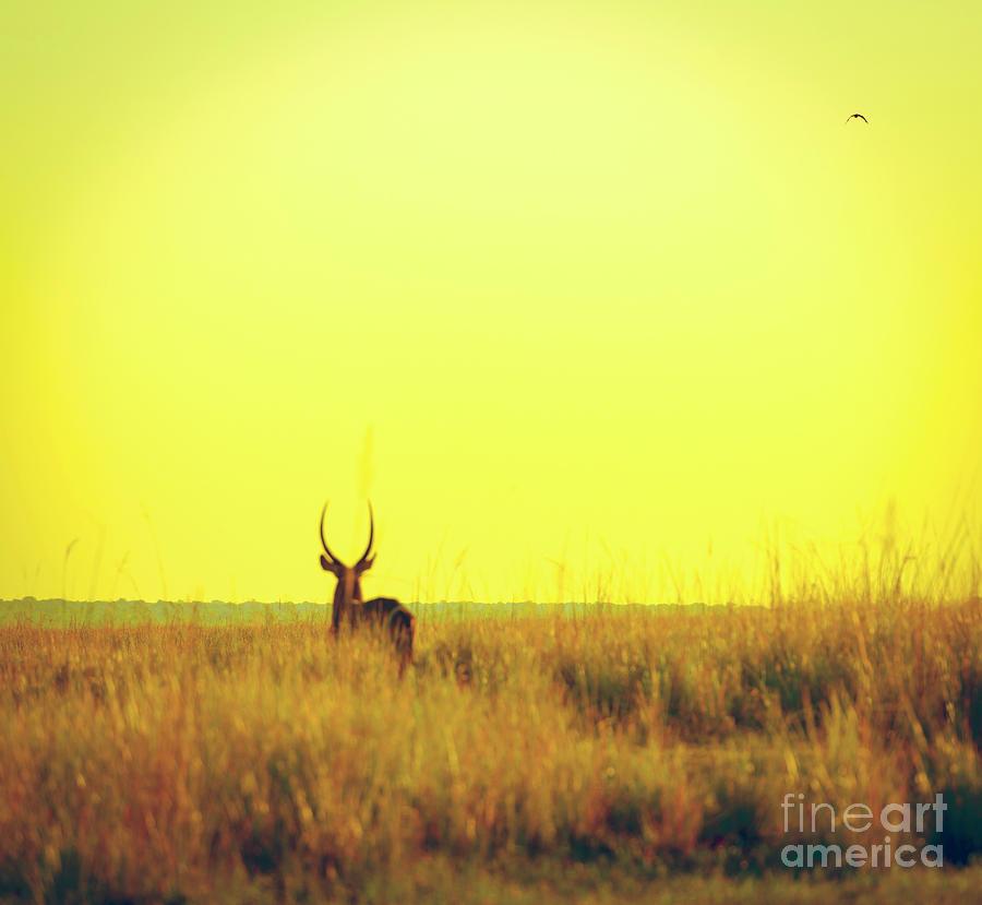 Impala Sunset Vintage Print Photograph