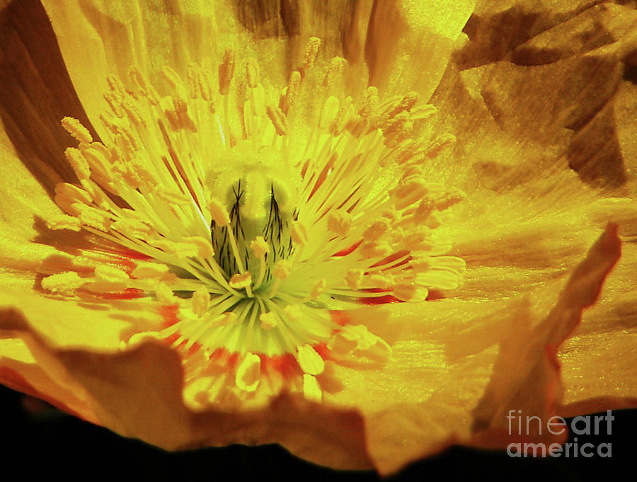 Spring Flowers Photograph - Imparting Light  by Daniele Smith