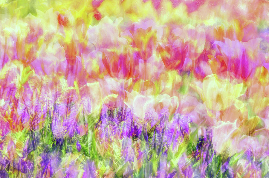 Flower Photograph - Impressionist Floral Xxxiv by Tina Baxter