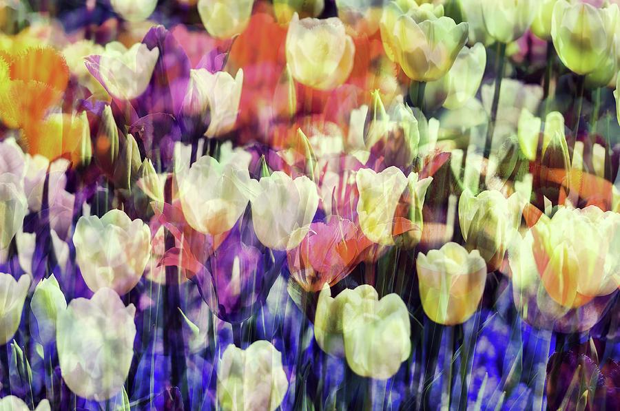 Flower Photograph - Impressionist Floral Xxxvii by Tina Baxter