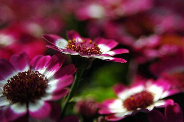Flower Photograph - In A Dream by Lucia De Giovanni
