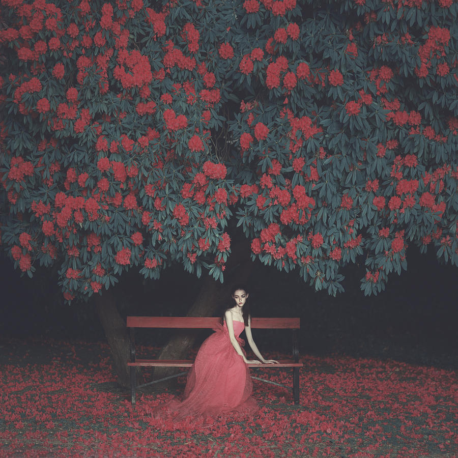Dream Photograph - In A Garden by Anka Zhuravleva