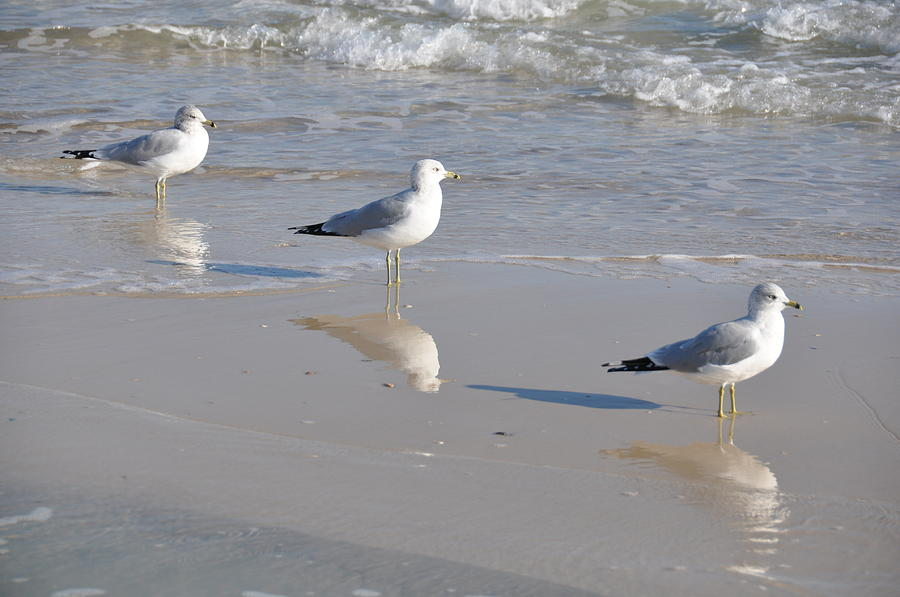 Birds Photograph - In A Row by Jan Amiss Photography