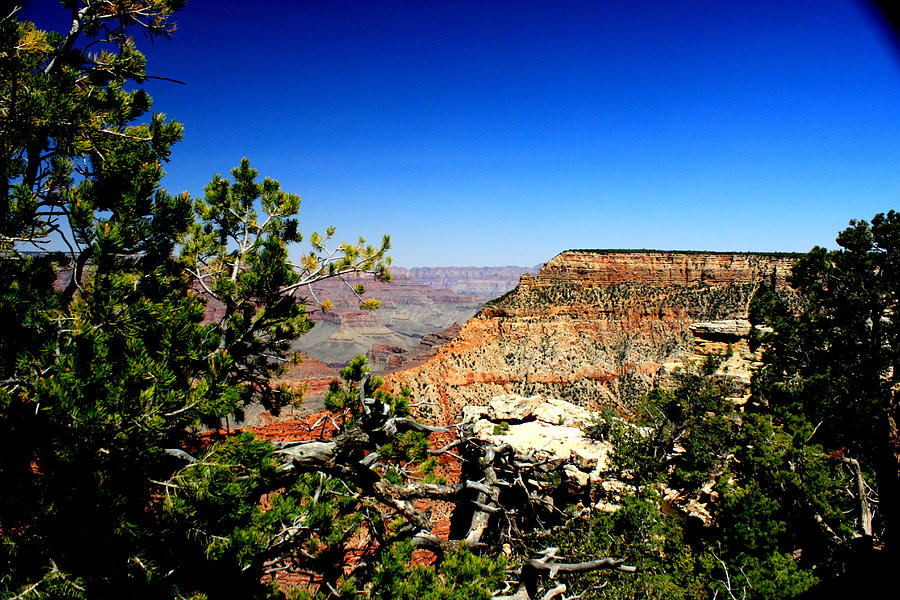 Grand Canyon Photograph - In All Its Splendor By Earls Photography by Earl  Eells a