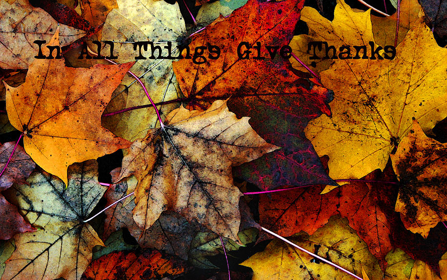 Fall Colors Photograph - In All Things Give Thanks by Joanne Coyle