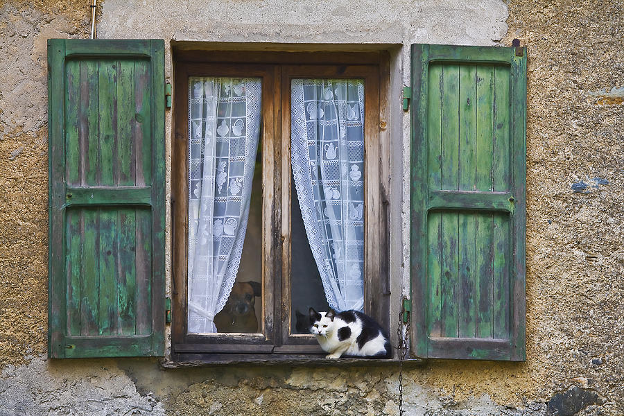Cat Photograph - In And Out by Laura Jelenkovich