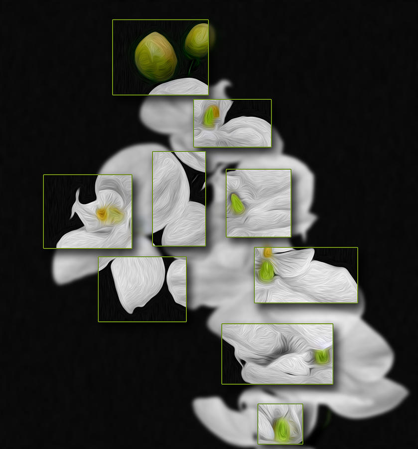 Flower Photograph - In And Out Of Focus 2 by Cecil Fuselier