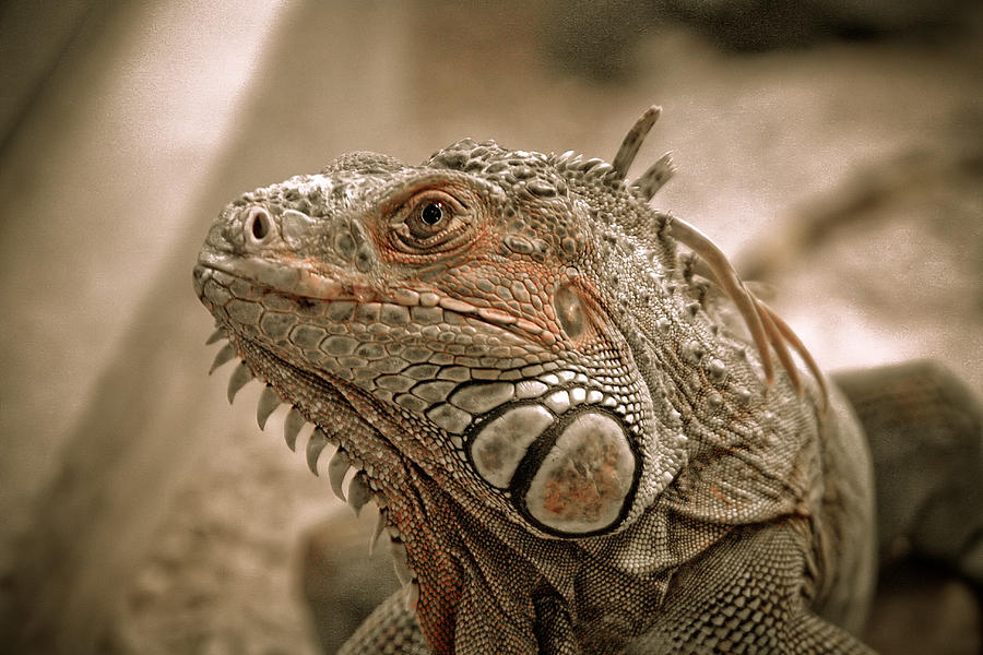Reptile Photograph - In Cold Blood by Raluca Mateescu