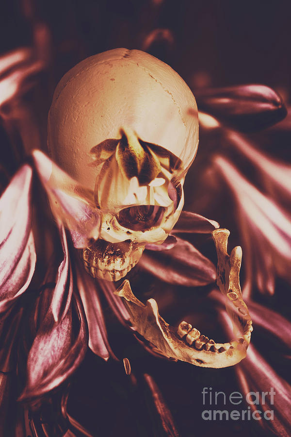 Skull Photograph - In Contrasts Of Soul Growth by Jorgo Photography - Wall Art Gallery