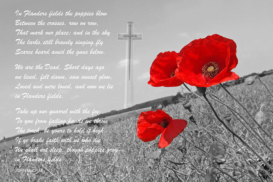 In Flanders Fields by Gill Billington