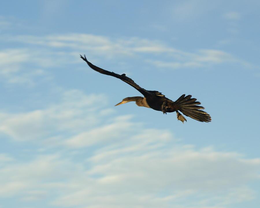 Birds Photograph - In Flight by Marty Koch