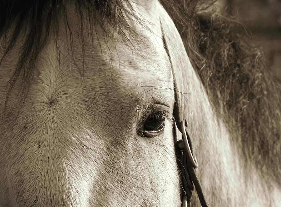 Horse Photograph - In German Pferd by JAMART Photography