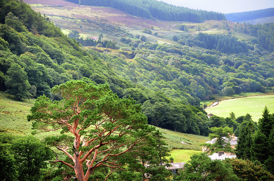 County Wicklow Photos: Snapshots of The Garden of Ireland ... |Wicklow Hills Ireland
