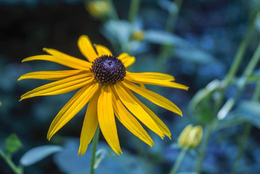 In My Garden Photograph